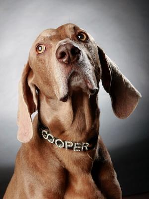 Case study – Cooper
