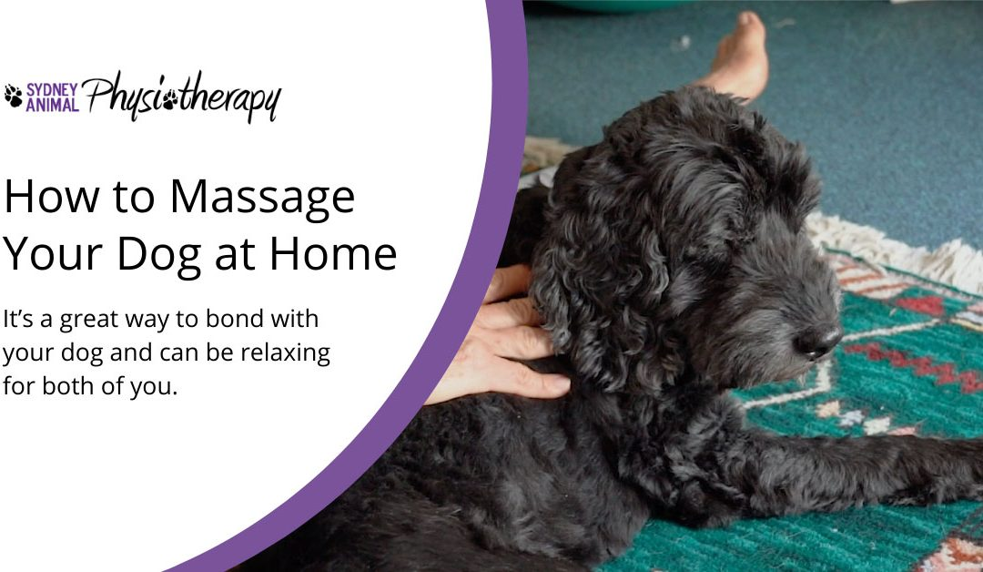 How to Massage Your Dog From Home