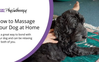 How to Massage Your Dog at Home