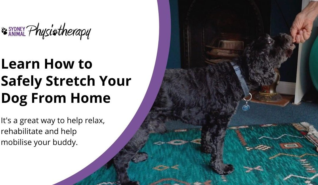 How to Stretch Your Dog From Home, Safely
