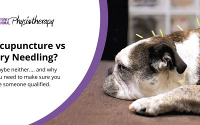 Acupuncture vs Dry Needling for Animals, or Neither?